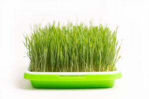 Queen Creek Aizona Microgreen Delivery Service